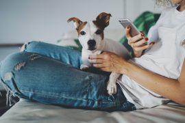vivendo com um pet